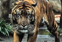 Animal / predators