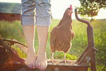 | Farm Life |