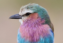 Birds / Colorful bird reference.