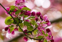 Puutarhamartta / Multa vetää puoleensa ja viherpeukalo ei ole keskellä kämmentä. Puutarhan satoa ja satumaisia kukkia.