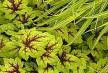 Gardening: Fabulous Foliage / The leaves of a plant, collectively; leafage.  / by Cynthia Blixt