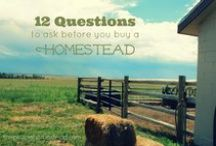 Gardening and Homesteading / Although I live in an apartment, I always dream of having a homestead and a big garden.