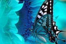 BUTTERFLIES / Flutter away with this board of butterflies