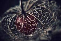 Winter 2014 / https://www.facebook.com/NefertemPhotography