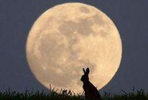 La luna nel pozzo / una delle meravigliose opere del buon Dio