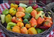"Pics of Market / Fun pictures of the Omaha Farmers Market.  Many by our ""resident photographer"" Chris Hicks!"