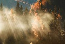 Fall I Herbst
