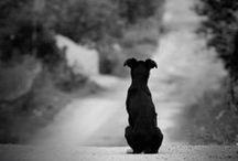 DOG ♥ / Most best #animal in the world #dog + My half dane :*