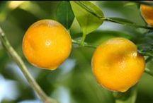 Delicious Fruit Harvest / Homegrown fruit harvest