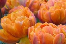 Flowers, Květiny / Krása květů