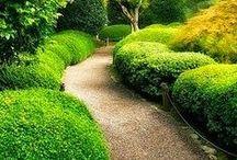 Garden, Zahrada / nápady a krásy zahrad
