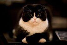 Cats - Kitten - Kočky / hravé a milé