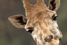 Love | Wild Africa