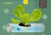 Why Hydroponics? / Here at Edible Garden we know that indoor farming is reliable, clean, and sustainable. Hydroponics just may be tomorrow's sustainable solution to feeding the world!