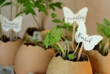 lEt's Get creative! / Fun ideas for your home, garden, herbs, and just about everything else!