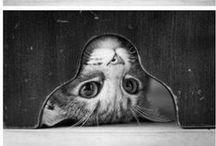 dessin animaux
