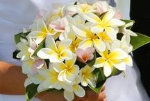 Flowers of Hawaii / by Kathryn Kabot