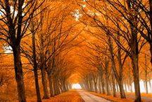 Autumn / by Kathryn Kabot