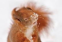 ♡ Winter wonderland / How winter looks like