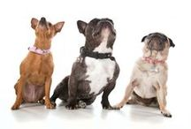The Marketing Dogs / Life at a marketing agency for a French Bulldog, a Pug and a Mini Pinscher