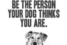Canine Companions / by Shea Farrell