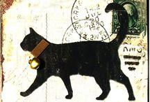 Koty Blachy