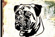 Psy Blachy