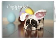 EASTER Cats & Dogs / Easter traditions, crafts, costumes or just cute pictures of festive dogs and cats....it's all here!  / by Pets Best Pet Insurance Services, LLC.