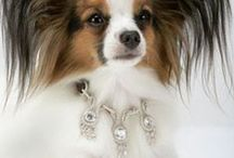 Pet Bling / All things sparkly and fancy for your favorite dogs and cats!  / by Pets Best Pet Insurance Services, LLC.