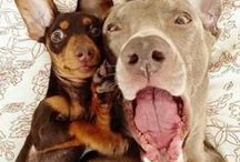 Pet #Selfies / Don't think for a minute, that you're the only one taking a selfie! Our dogs and cats are even getting in on the fun!  / by Pets Best Pet Insurance Services, LLC.