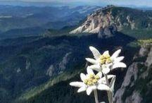 Das ist Österreich. Eure Pins & Eure Touren! / Interessantes - von Euch für Euch... :-)  Und wer hier mitpinnen will - einfach Nachricht schicken!  / by Weitwandern in Österreich
