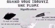 ☼ Plume Ange ☼