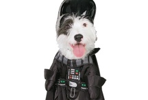Pets' Star Wars Costumes - JediRobeAmerica / Star Wars Costumes for your Pets