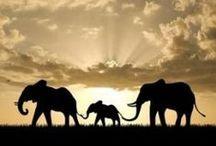 ELEPHANTS! <3 / by Monica Smith
