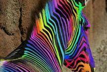 regenbogen en regenboogkleuren