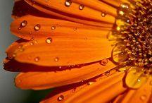 Garden / Mother Nature as creator...