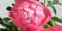 Gardening | Garten / Gardening, perennials, Flowers, Gartenplanung, Beete anlegen, Stauden, Blumen, Kräuter, Pflanzenpflege