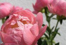 Floral Styling & Trends   Blumentrends / Floral style, trends, news, flowers, Blumen, Trends, Jahreszeiten, Monate, seasons