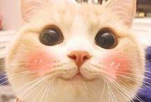 Cute cats / #cats #cute #fun