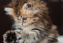 Cats ❤️ Koty