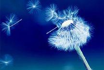Soft,  fragile,  delicate... ❤️ Delikatne...