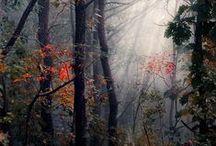 Into the woods ❤️ Leśne wędrówki