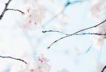 Spring ❤️ Wiosna