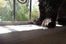Mis Gatos