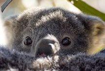 koalas *_*