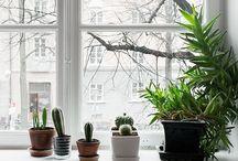 Plants Design / Plants, Flowers