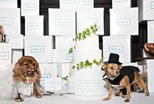 Toast Meets World's Wedding / Toast Meets World married Finn Hearst this week in THE #wedding of 2016. The two met at a charity gala in New York and fell head over paws for each other. They've teamed to stop puppy mills with their @ZolaRegistry. Check out their registry and photos from their big day below. Their puppy love will last for ever.   https://www.zola.com/registry/toastandfinn  https://www.zola.com/registry/toastandfinn