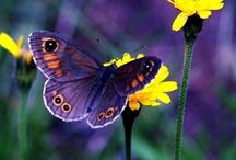 Butterflies and Moths / by Donna Fennick