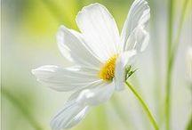 ~ Daisy Meadows ~