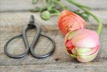 ~ Flower  Shop ~